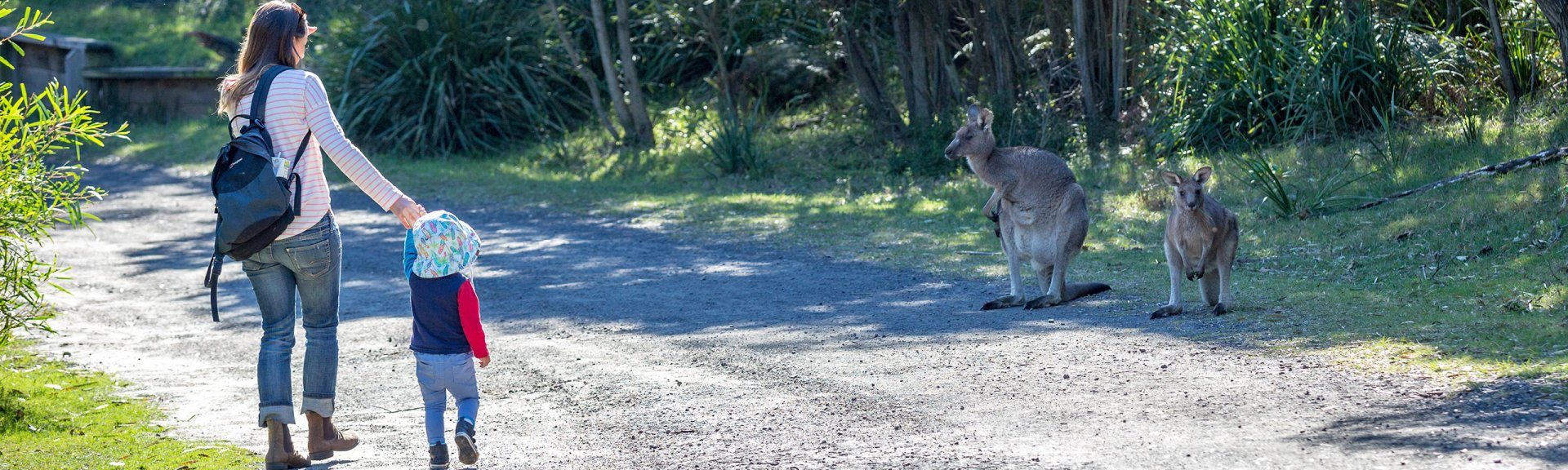 Kangaroo encounters at Booderee