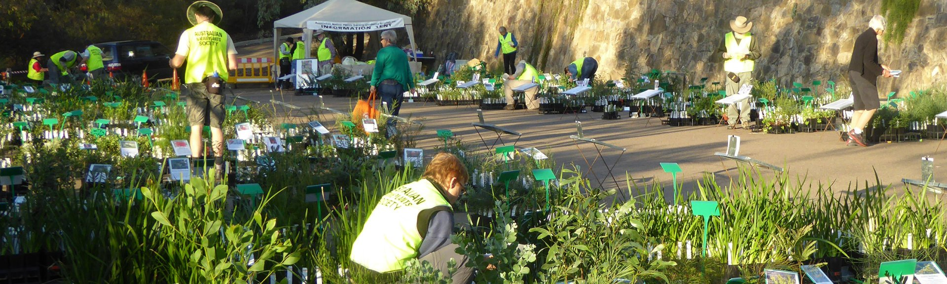 Plant sale run by the Australian Native Plant Society
