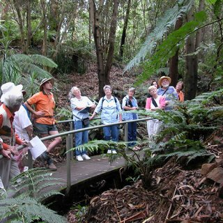 Booked walk in the rainforest gully