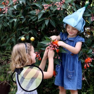 Pollination investigation (Preschool to Year 2)