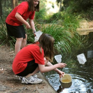 Pond-dipping: habitats and lifecycles (Years 3–6)