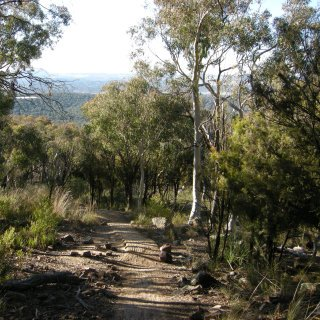 Trail through Black Mountain bushland