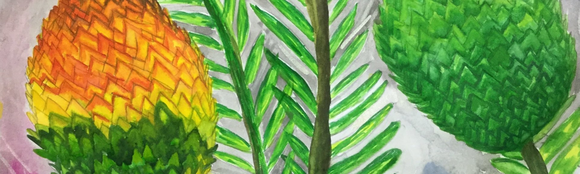 Wollemi pine. By Meera, age 10