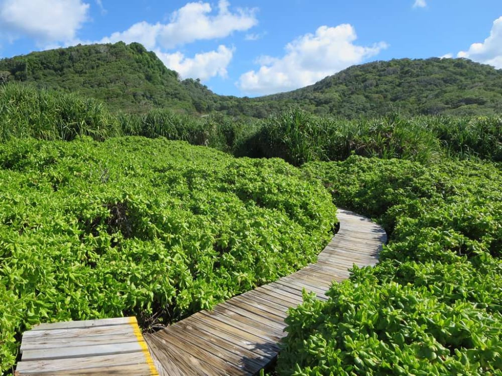 The boardwalk from Lily Beach to Ethel Beach. Photo: David Stanley / CC BY 2.0