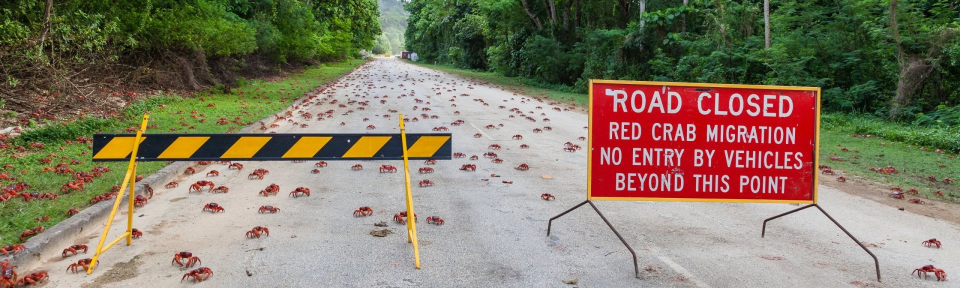 Visiting during the red crab migration requires a bit of extra planning. Photo: [Wondrous World Images](https://www.wondrousworldimages.com.au)