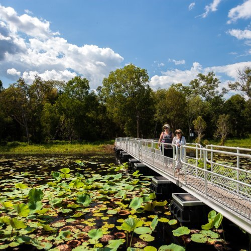 Walkers on the footbridge look out over the waterlillies in the billabong