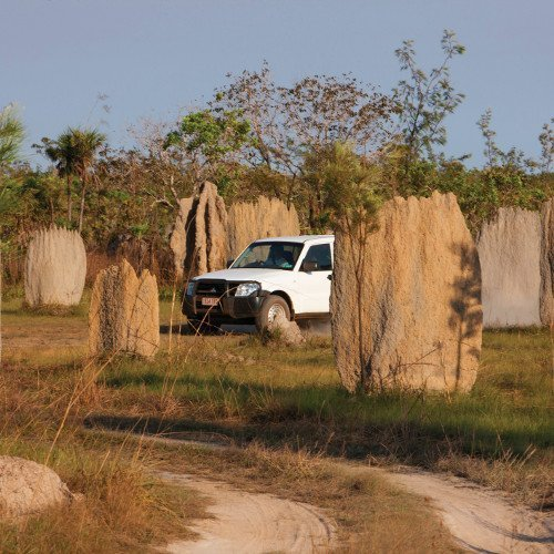 Four-wheel driving past termite mounds. Photo by Peter Eve, TourismNT.