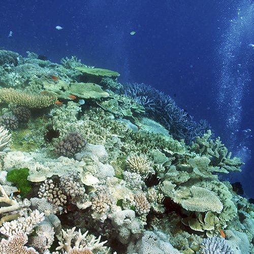 Coral Sea Marine Park Draft Management Plan