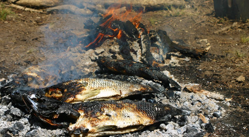Two roasted barramundi sitting on hot coals in front of an open fire