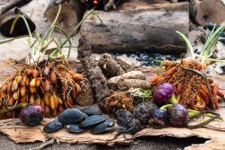 Bush foods from the stone country