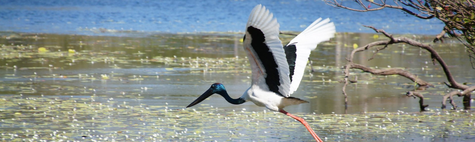 Birds | Kakadu National Park