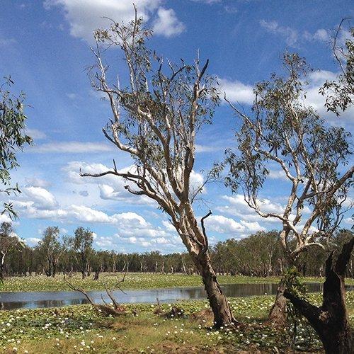 Sandy Billabong Campground | Kakadu National Park