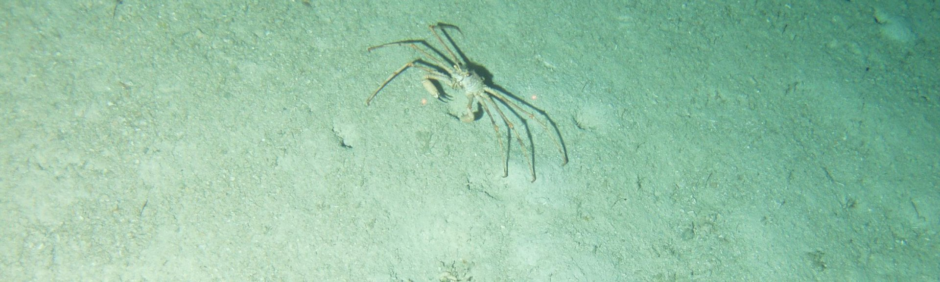 Marine life on the seafloor in the Zeehan Marine Park. Photo courtesy of CSIRO