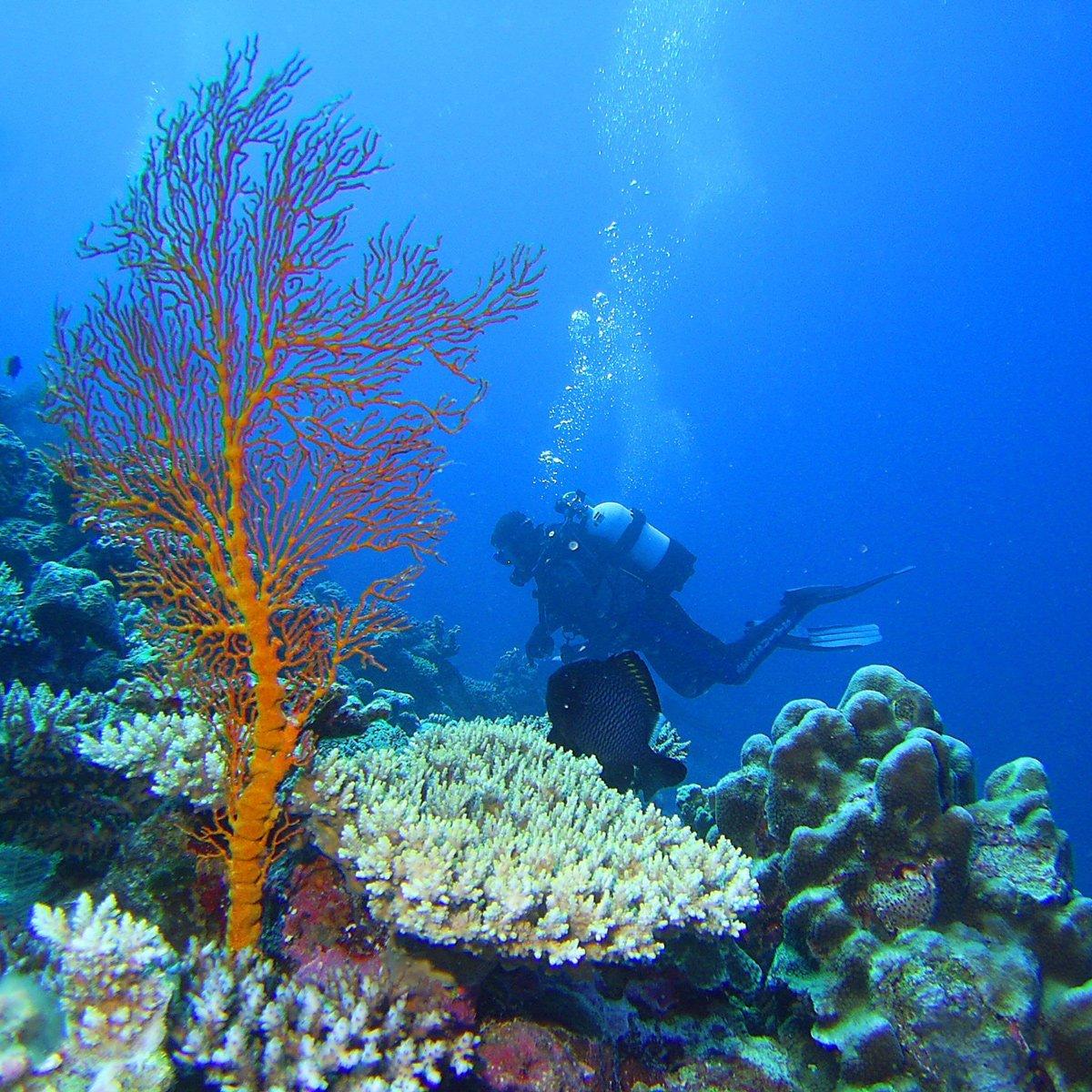 Mermaid Reef Marine Park | Australian Marine Parks