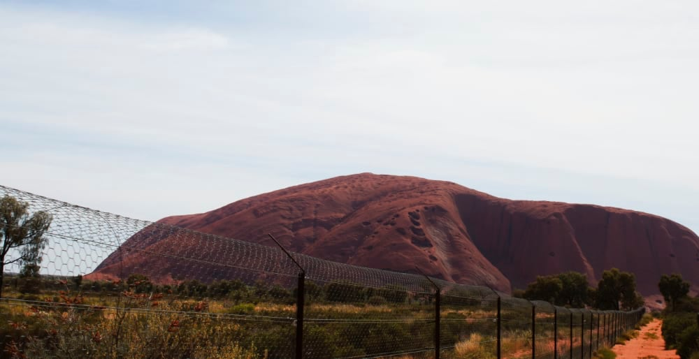 Wire fence around a paddock with Uluru in the background